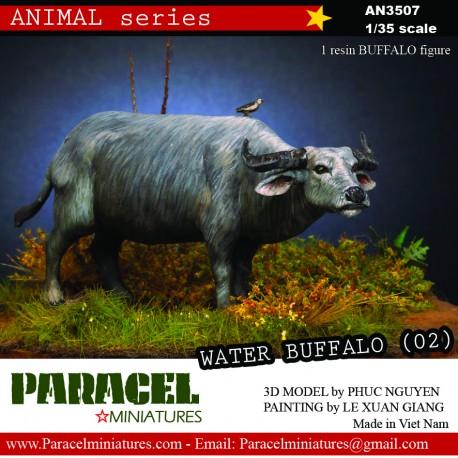 VIETNAMESE water Buffalo 01