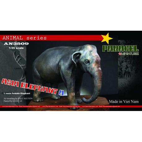 VIETNAMESE water Buffalo 02
