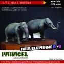 !/72 ASIA ELEPHANT A+ B
